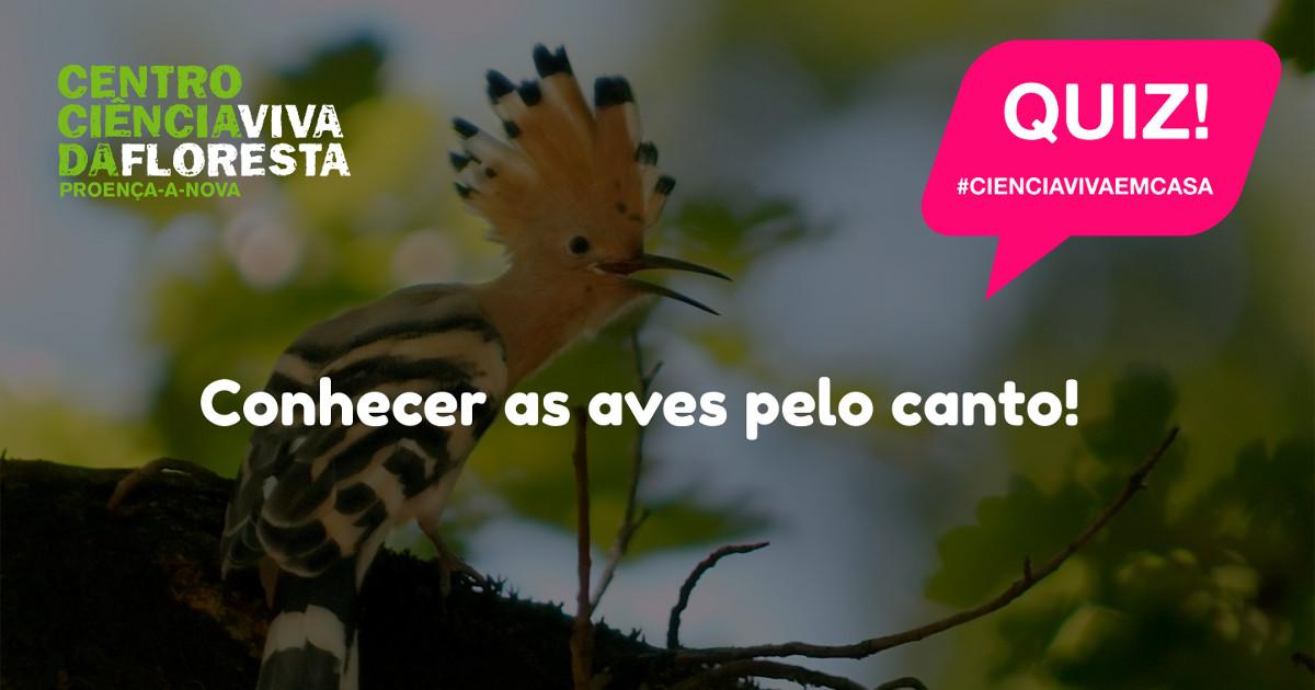 Quiz! Conhecer as Aves Pelo Canto!